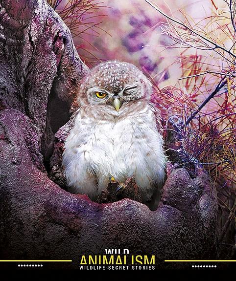 Тетрадь 60л, клетка, УФ-лак «Star» Animalism  ( коллекция 2017г)